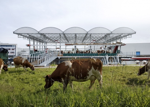 Floating Farm Dairy